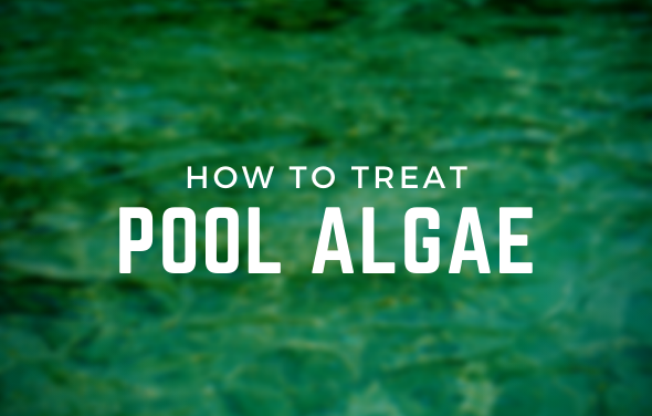 How To Treat Pool Algae